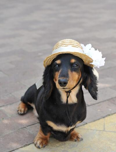 ペットだって大切な家族❤愛犬と一緒の結婚式♫
